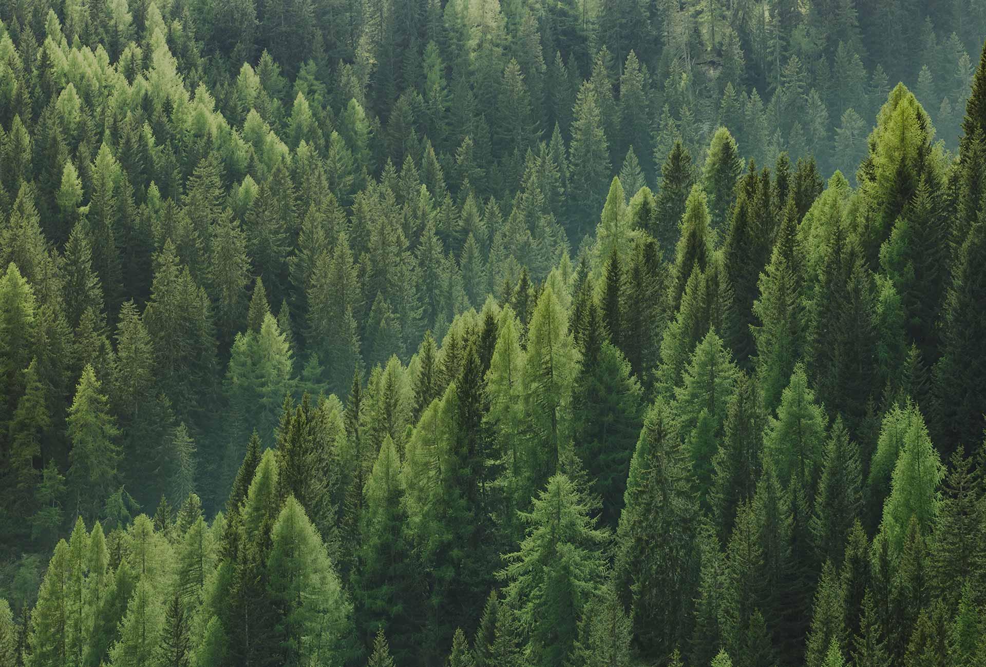 Novacart sostenibilità