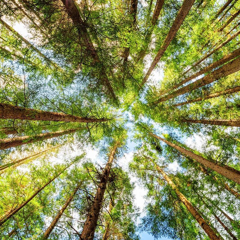 Novaservice sostenibilità